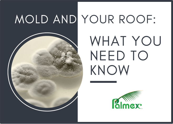 Mold and Your Roof